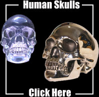 Leigh Heppell Human Skull in Chrome or Clear